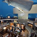 【岩手・山田】鯨と海の科学館復活 津波全壊から6年…