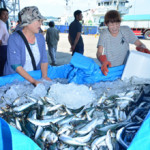 漁船誘致、好スタート 久慈市営魚市場