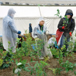 津波被災地 防災林育て 南相馬市民ら苗木3万本植樹