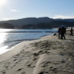 景勝「高田松原」の砂浜復活へ 陸前高田、再生作業進…