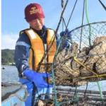新人カキ漁師が奮闘中 移住2年目、来月初水揚げ